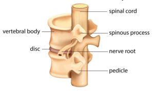 Nerve roots block