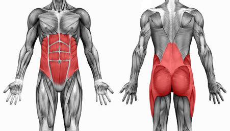 Why are core muscles important for back pain?