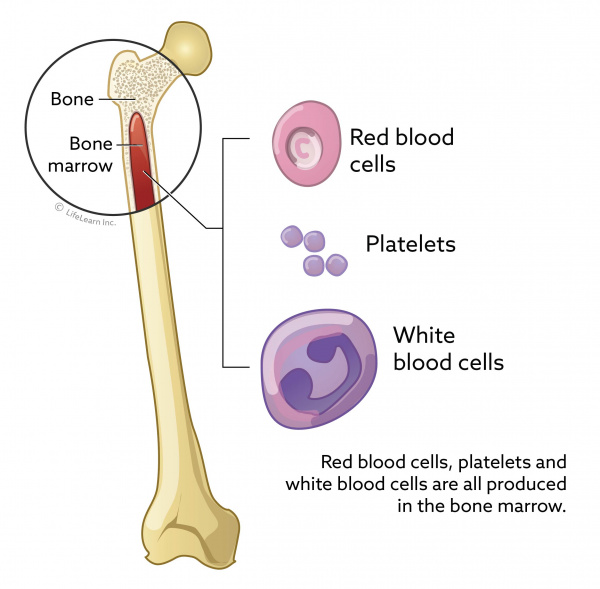 How do you extract bone marrow stem cells?