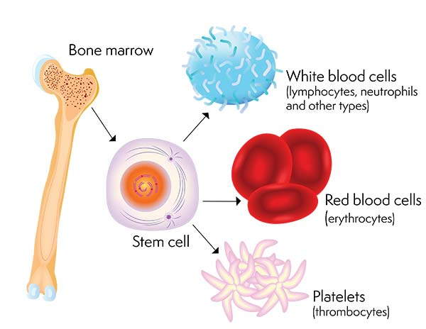 How to extract stem cells from excess fat in your body?